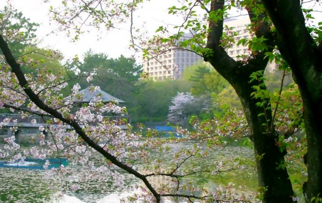 鶴舞公園の花見の穴場